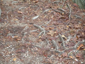 tree vine path